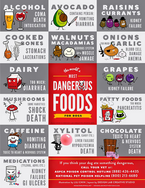 The Real Top Dangerous Foods For Dogs And Cats