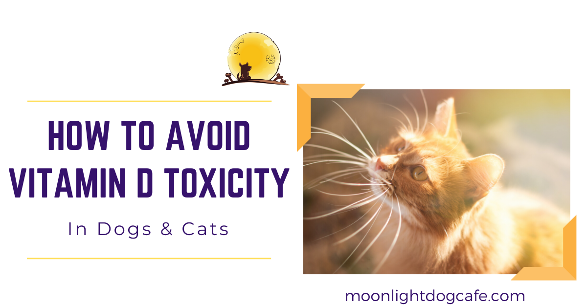Vitamin D Toxicity In Dogs Cats How To Avoid Vitamin D Toxicity In Pets